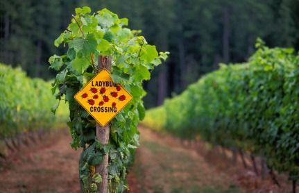 sign rows grape vines vinyards