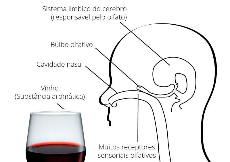 Como a memória olfativa faz parte da análise do vinho