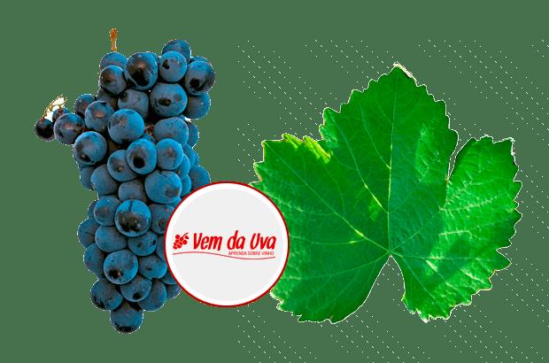 Alicante Bouschet: características do vinho