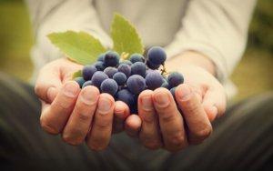 Gastar com vinho_2