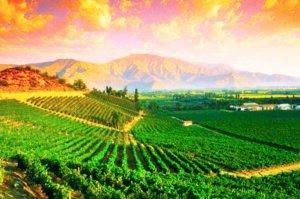 vinho chileno_3
