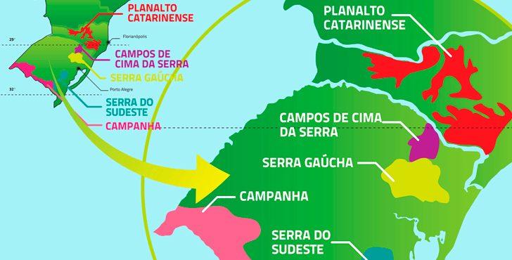 vinho-brasileiro-é-bom.jpg