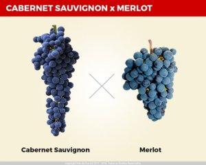 Qual a Diferença Entre o Vinho Cabernet Sauvignon e o Merlot? e cabernet sauvignon