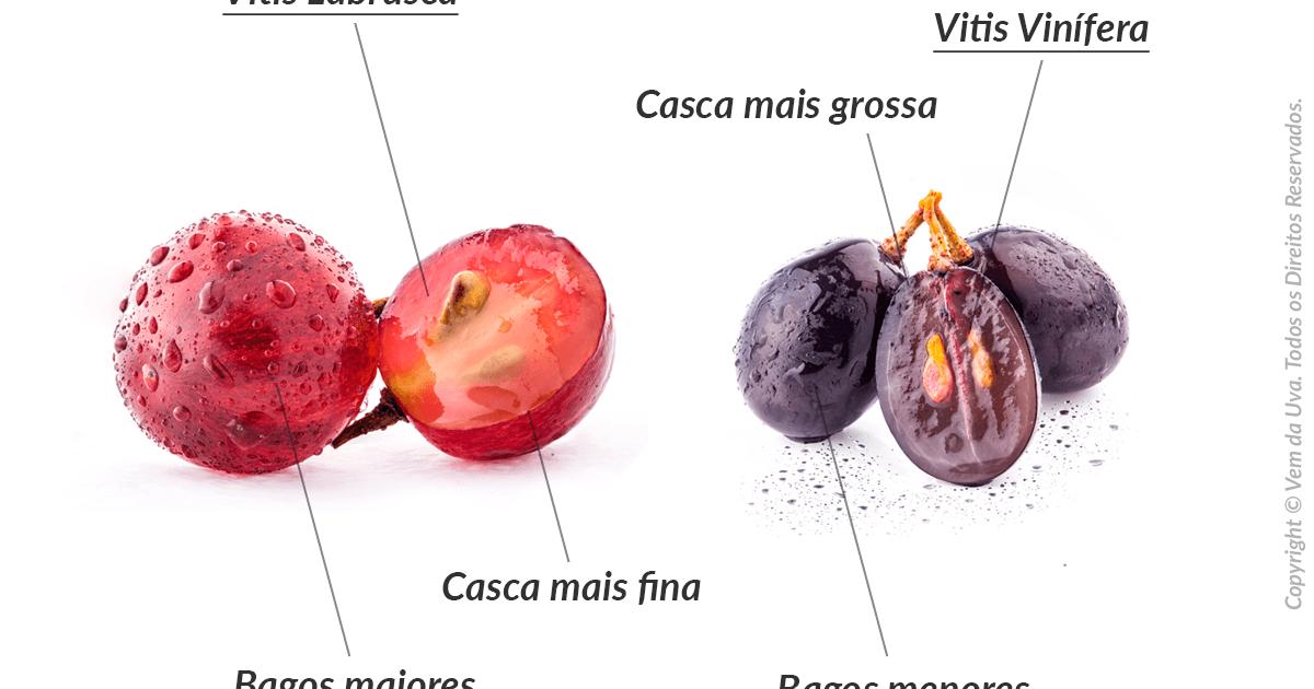 Vinho Fino ou Vinho de Mesa? Quais as diferenças?