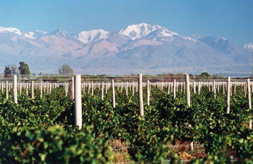 10 curiosidades do vinho Malbec (que talvez você não saiba!)