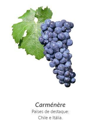 Principais uvas de Vinho Tinto