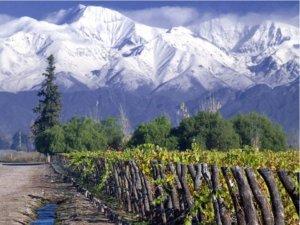 13 curiosidades do vinho Carménère (e seus 200 anos disfarçada de Merlot!) e Carménère