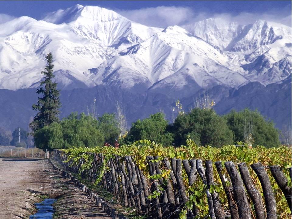 13 curiosidades do vinho Carménère (e seus 200 anos disfarçada de Merlot!)