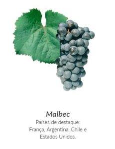 Detatlhes da uva Malbec, que dá origem ao vinho Malbec.