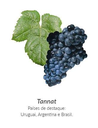 Tudo sobre o vinho Tannat: Bônus: Lista com os 50 melhores Tannat do mundo!