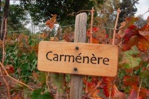 Vem-da-Uva-Carmenère-300x200.jpg