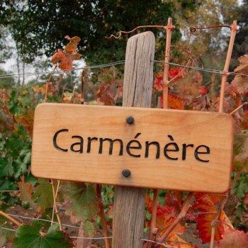 Características do vinho Carménère e Carménère