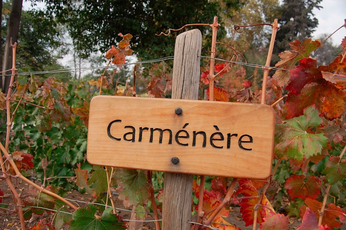 Vem-da-Uva-Carmenère.jpg