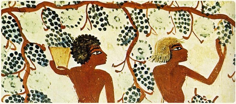 história-do-vinho-3.jpg