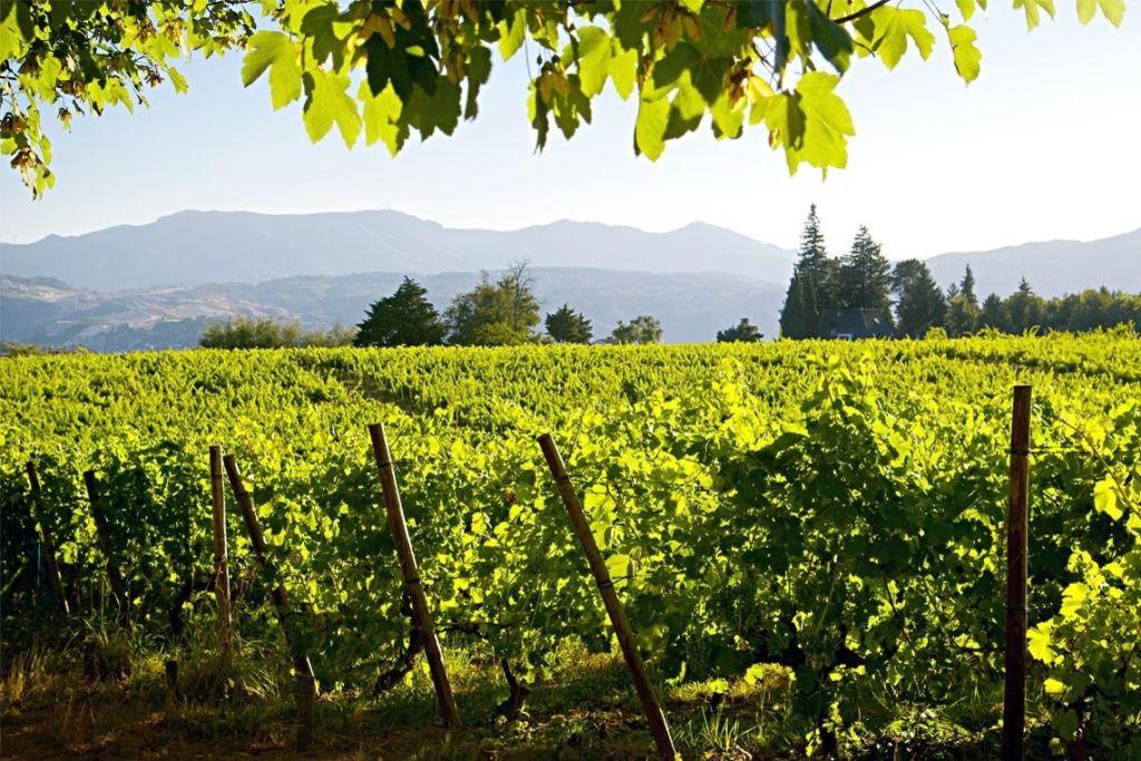 vinho_verde-1-1024x683.jpg