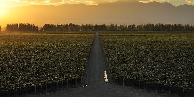 Feira Internacional do Vinho: 250 marcas nacionais e internacionais