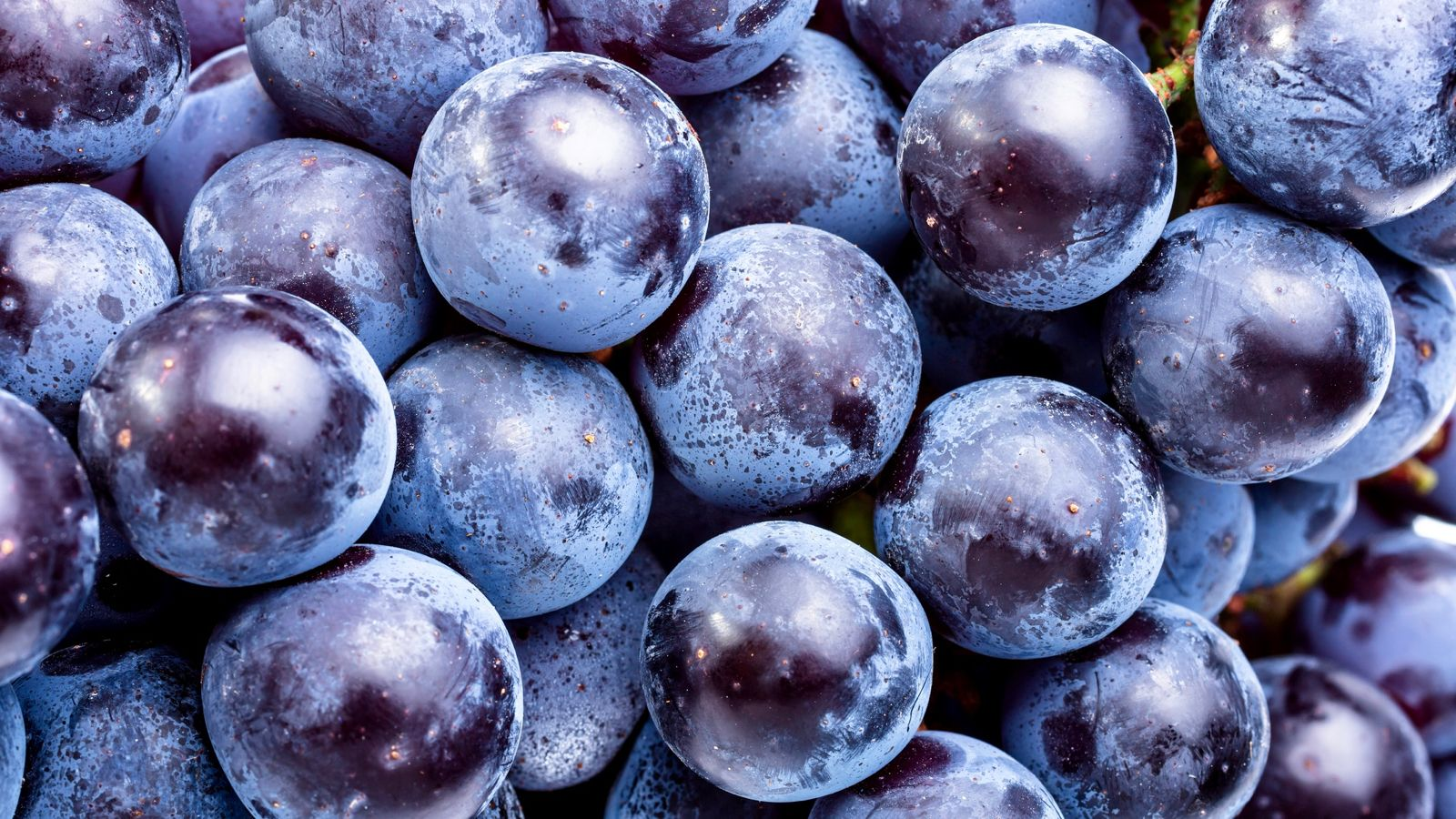 O polifenol no vinho faz bem? e polifenol