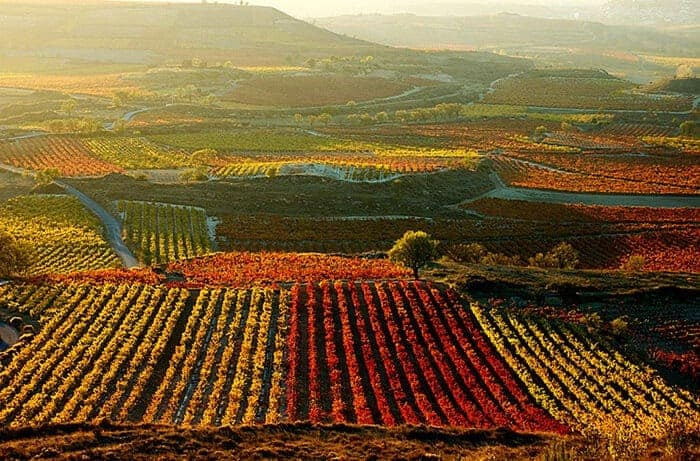 Vineyard-in-La-Rioja-Spain-700x461.jpg