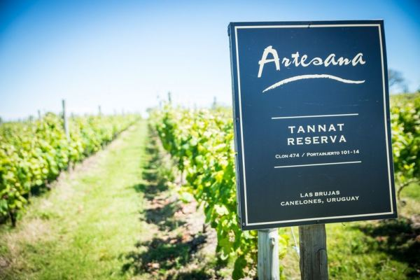 plantação-tannat-Bodega-Artesana-600x400.jpg