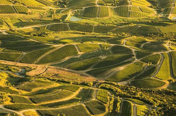 11 Melhores Vinhos Uruguaios pra Você Experimentar em 2020